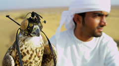 Proud Middle Eastern Male with Trained Saker Falcon Stock Footage
