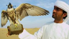 Arabic Male Traditional Dress Displaying Falco Cherrug Falcon Stock Footage