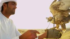 Trained Falco Cherrug Falcon Balanced Arabic Male Owners Glove Stock Footage