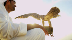 Proud Arabic Male Displaying Trained Saker Falcon - stock footage