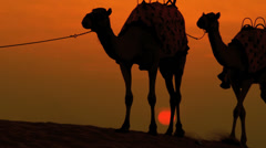 Arabic Male Walking Camels Desert Sunset Stock Footage