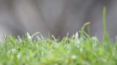 Dew drops on the grass - stock footage