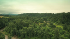 Tree tops in the forest. Forest. Stock Footage