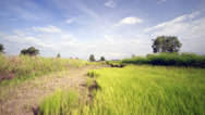 Rice field with blue sky , Time lapse Stock Footage