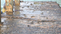 Stock Video Footage of Little crabs carrying walking about on seaside