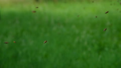 Bees flying around on a green background Stock Footage