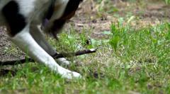 Gunter tear grass - stock footage