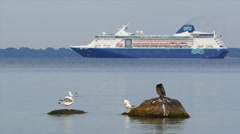 Passenger ships slowly travels along coast. In front birds on stones in water. Stock Footage