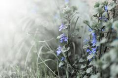 kukka - stock photo