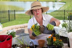 senior lady removing a rootbound pot from a pot - stock photo