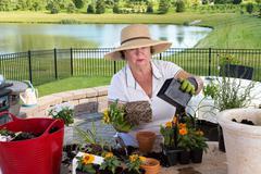 senior lady gardener repotting houseplants - stock photo