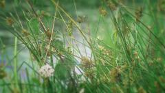 Wild Flowers and Green Leaves and Grasses Natural Background rack focus Stock Footage