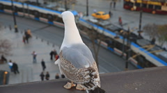 Seagull looking at tram and tourists Stock Footage