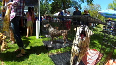 Dogs Looking For Homes At Adoption Event- Flagstaff AZ Stock Footage