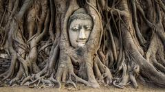 Head of Buddha Statue in the Tree Roots, Ayutthaya, Thailand Stock Photos