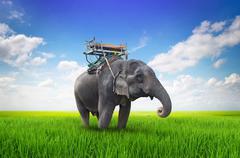 thai elephant on meadow - stock illustration