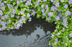 top view of flower after rain. - stock photo