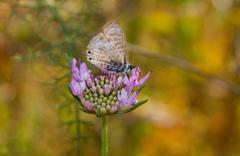 Butterfly on daisy flower Stock Photos