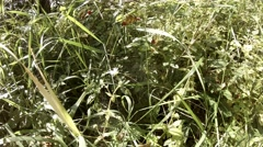 4k Nature undergrowth with insects and little spider in web Stock Footage