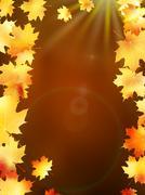 Autumn leaves on colorful. plus EPS10 Stock Illustration