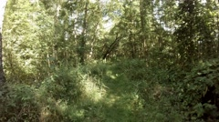 4k Wild Nature Reserve in summer pan rotation Stock Footage