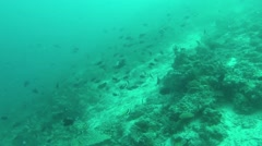Scuba coral reef wall with angel fish and deep blue water - stock footage
