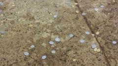 Coins money in wishing well pond Stock Footage