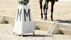 Dressage arena and horse Stock Footage