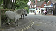 New Forest ponies in Burley, New Forest National Park, Hampshire, England. Stock Footage