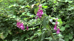 Bee on flower mountains of Portugal Stock Footage