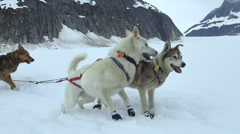 Dogsled start off and break - Alaska Stock Footage