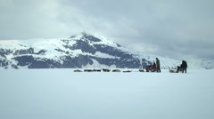 Dog sledding in Alaska - wide angle and subjective camera Stock Footage