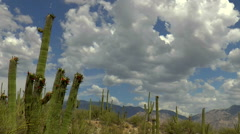 Beautiful Arizona Desert Blooming Saguaro Cactus Cloud Landscape Time Lapse Stock Footage
