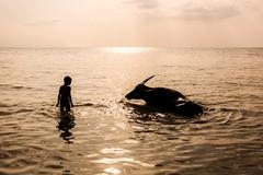 boy and buffalo bathing in the sea - stock photo