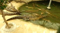 Group of Crocodiles in Aligators Farm Stock Footage