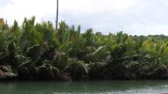 Jungle river shoreline Stock Footage