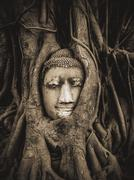 Head of Buddha Statue in the Tree Roots, Ayutthaya, Thailand - stock photo