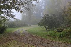 In rainy forest during fall time with quails. Stock Photos