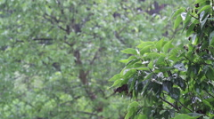 Spring rain. Weather. With sound. Stock Footage