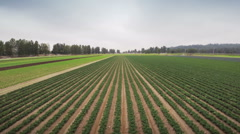 Agriculture field. Stock Footage