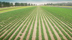 Agriculture field. Farm land. Stock Footage