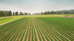 Agriculture farm. Natural food. Stock Footage