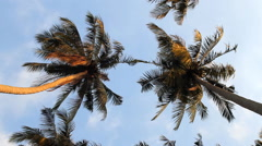 Coconut trees and sky Stock Footage