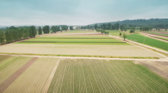 Flying over the field.  Stock Footage