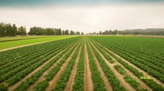 Agriculture field. Planted field. Farmland.  Stock Footage