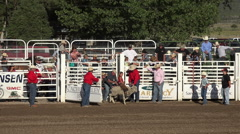 Young girls rides sheep muttin busting rodeo HD 236 Stock Footage