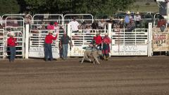 Mutton Bustin sheep riding rural rodeo HD 238 Stock Footage