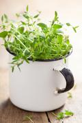 Fresh thyme herb in enamel cup Stock Photos