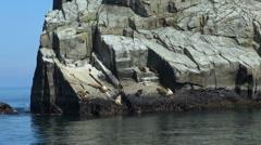 Seals sunbathe on the rocks - Kenai Fjords, Alaska Stock Footage