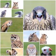 Falconry birds. Stock Photos